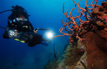 Diving with Scuba Safaris (3)